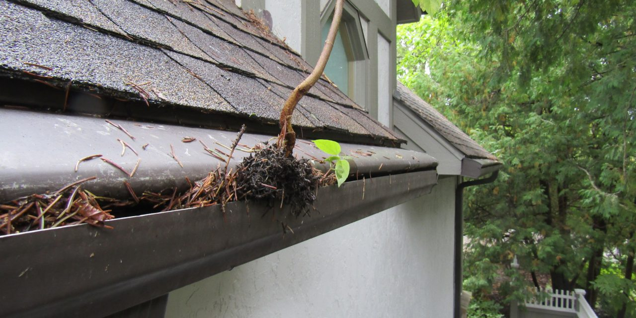 12 Tips on How to Clean Gutters